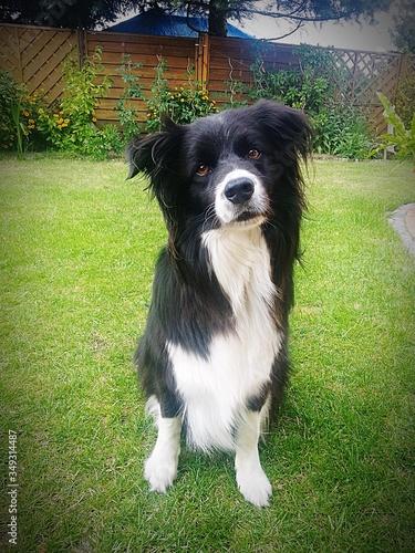 Dog On Grassy Field In Yard Canvas Print