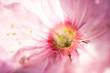 kwitnący kwiat makro, zbliżenie