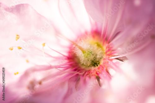Obraz kwitnący kwiat makro, zbliżenie - fototapety do salonu