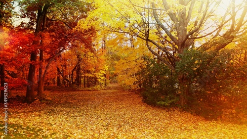 Fototapety, obrazy: Pathway Amidst Autumn Trees In Forest
