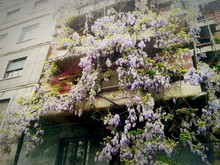Low Angle View Of Flowers On P...
