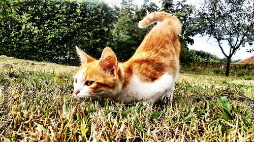 Photo Alert Cat In Grassy Field