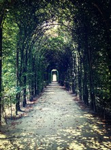 Footpath Through Pergola Covered In Ivy