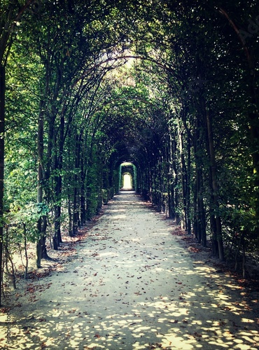 Footpath Through Pergola Covered In Ivy Fototapeta