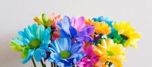 Multi-colored Chrysanthemums O...