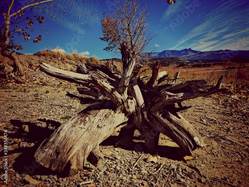 Photographie Drift Wood On Arid Landscape Against Blue Sky