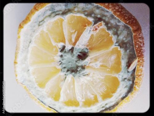 Fotografie, Tablou Cross Section Of Molded Orange