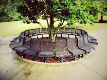 Metal Seats Around Single Tree In Park