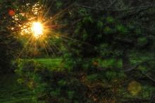 View Of Sun Shining Through Tr...