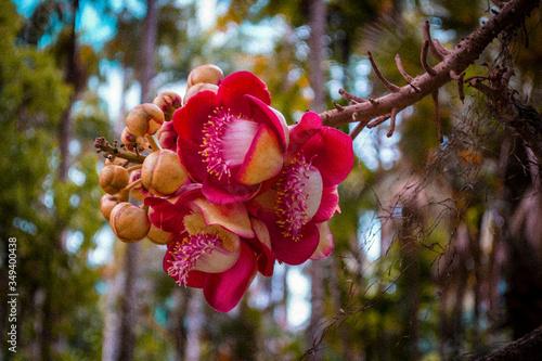 Photo Jardin Botanico de Rio de Janeiro