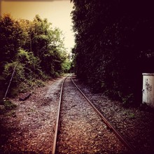Railroad Tracks Amidst Trees In Countryside