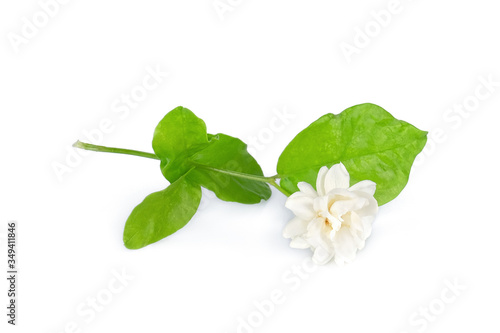 jasmine flower with leaf isolated on white background Canvas Print