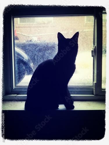 Black Cat Looking Through Window Fototapet
