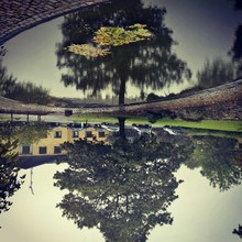 Upside Down Image Of Tree And House By Pond
