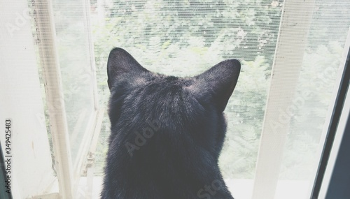Fotografiet Rear View Of Black Cat
