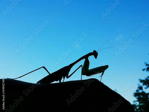 Silhouette Of Insect Canvas