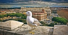 Close-up Of Seagull Against Cityscape