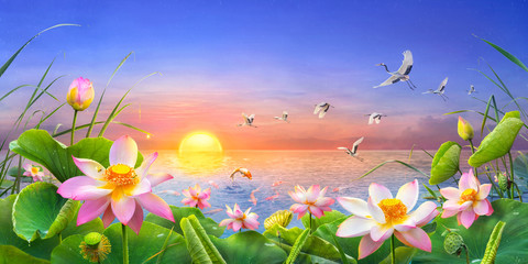 Obraz na Szkle Do sypialni Beautiful lotus flower blooming as the sun rises in the it's raining with a koi carp fish Jumping and red crowned crane flying through, Which is auspicious feng shui