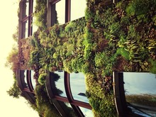 Low Angle View Of Ivy On Building