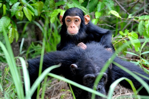 Photographie High Angle View Of Monkeys In Forest