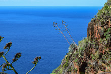 Subtropical Vegetation Of The Canary Islands With Cactus And Shrub Flora On Volcanic Ground Cliff Next To The Atlantic Ocean At La Palma.
