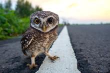 Eagle Owl/An Eagle Owl On Blur...
