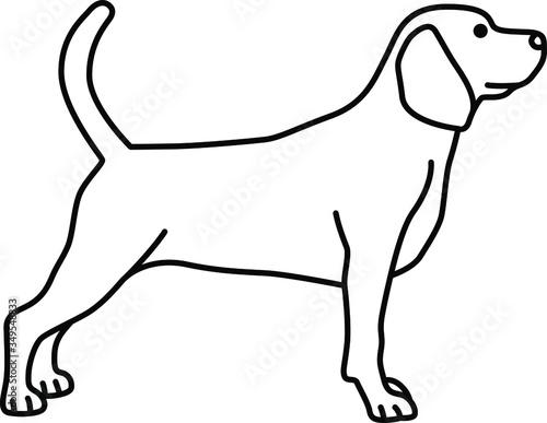 Fototapeta An icon illustration of a Beagle obraz