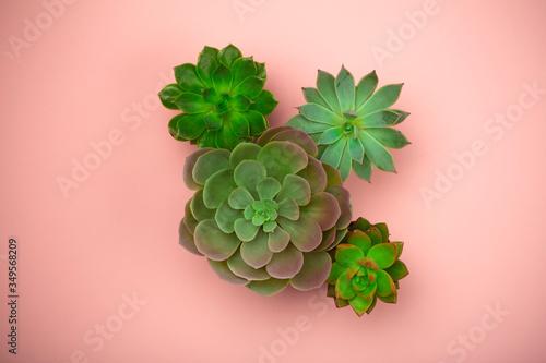 Photo Succulent plant background