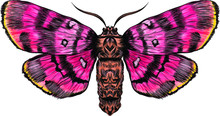 Pink Yellow Beautiful Fairy Moth