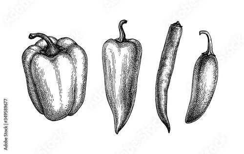 Fototapeta Ink sketch of peppers obraz