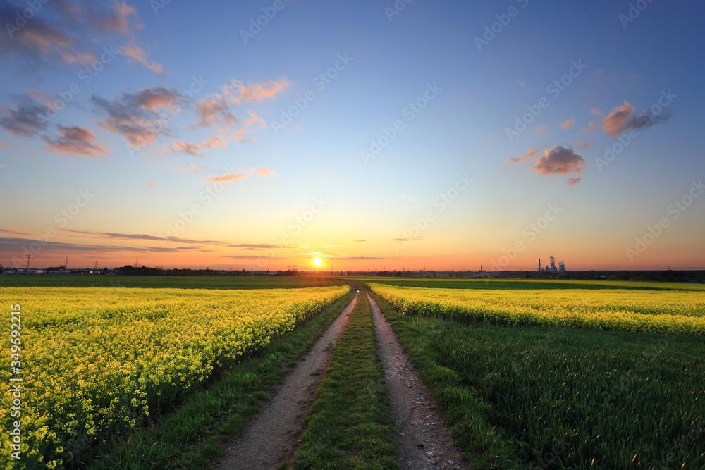 Piękny zachód słońca nad polami rzepaku, zielone zboża i Polna droga.