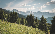 Panoramic Mountain And Forest ...