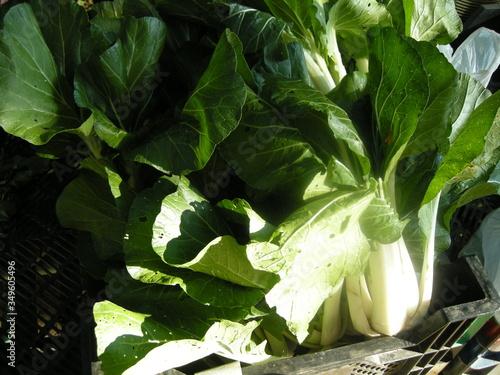 Fototapeta Close-up Of Plant obraz