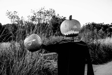 Jack O Lanterns By Plants Against Clear Sky