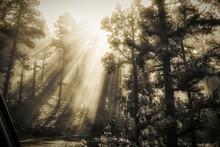Raggi Di Sole Filtrati Alberi