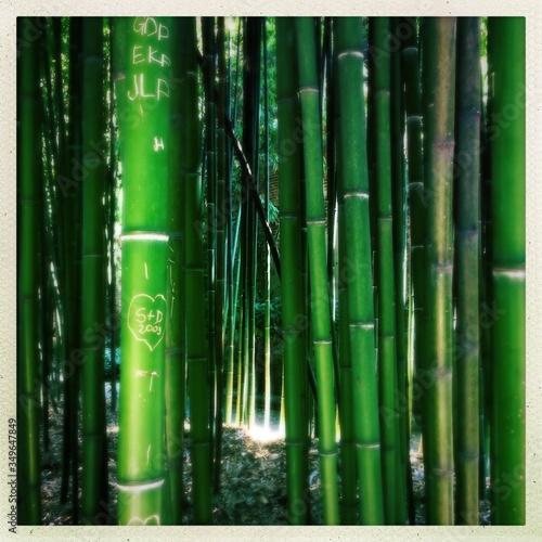 Tableau sur Toile Full Frame Shot Of Bamboos