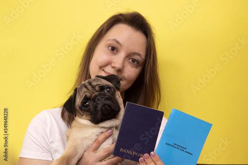 pug dog with veterinary passport immigrating or ready for a vacation Tapéta, Fotótapéta