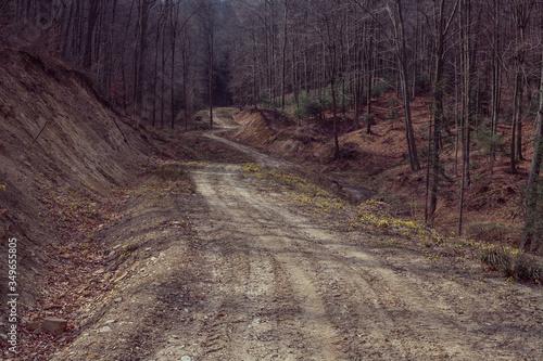 Fototapeta Jesienna droga przez las.