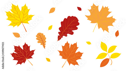Fototapeta Autumn leave. Red and yellow different leaves on a white background. Design elements. obraz