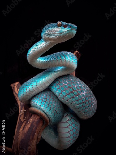 Canvas-taulu Close-up Of Blue Snake On Branch Against Black Background