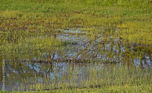 Marshland Slika na platnu