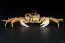 Close-up Of Crab Over Black Background
