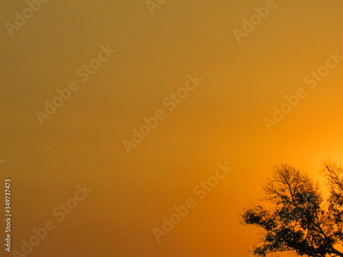 Sunset in the wetland of Mato Grosso. Wallpaper Mural