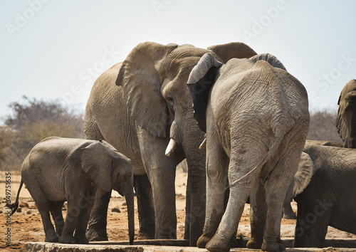 Elephants Standing Against Clear Sky Wallpaper Mural