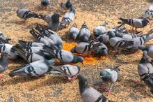 High Angle View Of Pigeons Feeding Seeds On Walkway