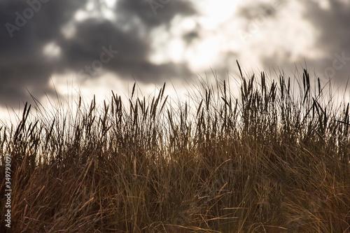 Trawy, łąki, piękne chmury, widok jak z bajki.