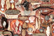 Seashell, Driftwood, Seaweed A...