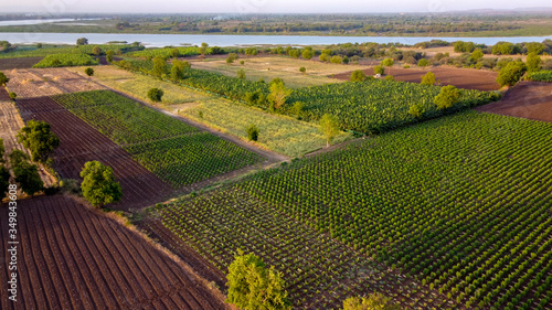 Aerial top view of agriculture field Wallpaper Mural