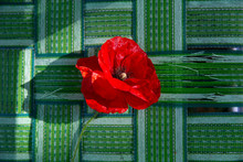 Red Poppy On Green Lawn Chair
