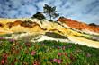 Blüte im Frühling. Portugal, Algarve.